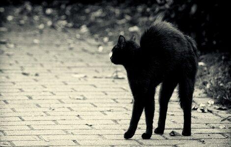 Fekete macska, egy másik balszerencsét hozó babona