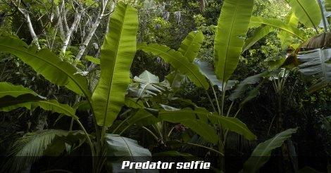 Predator selfie - egy predatoros mém